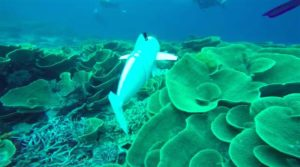 MIT 3D Prints 'SoFi' Robotic Fish For Underwater Observation